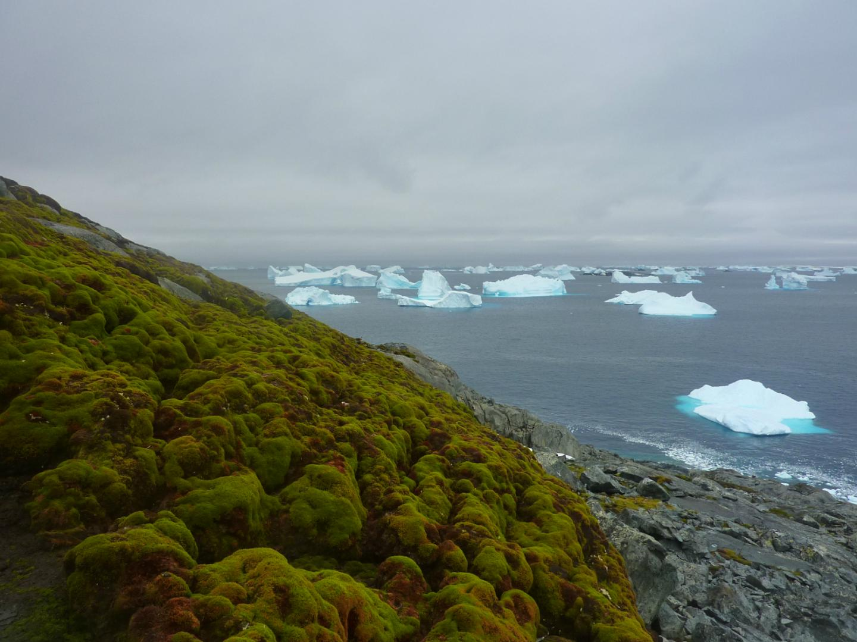 ანტარქტიდამ გამწვანება დაიწყო - გლობალური დათბობის წყალობით, კონტინენტი გეოლოგიურ წარსულში ბრუნდება