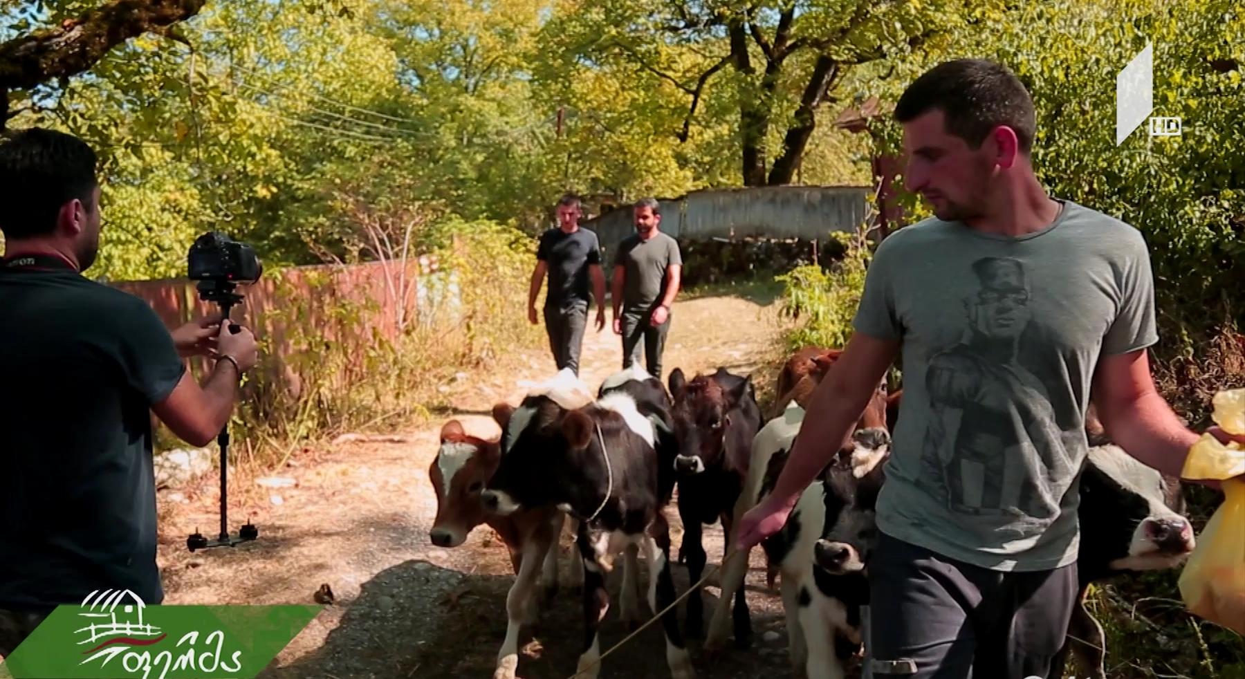 მაღალმთიანი რაჭის ახალი სიცოცხლე - მიტოვებულ სოფელში დაბრუნებული ტყუპი ძმების ამბავი/ ახალი რუბრიკები და აგროგმირები #ფერმაში