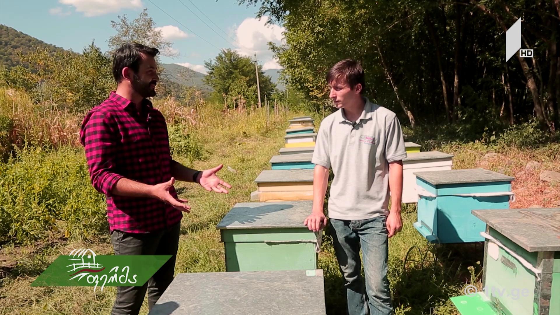 ახალგაზრდა მეფუტკრის ერთი სკით დაწყებული ბიზნესი/ ურბანული მეფუტკრეობა თბილისში/ ველური მცენარეების საიდუმლო და სარგებელი #ფერმაში