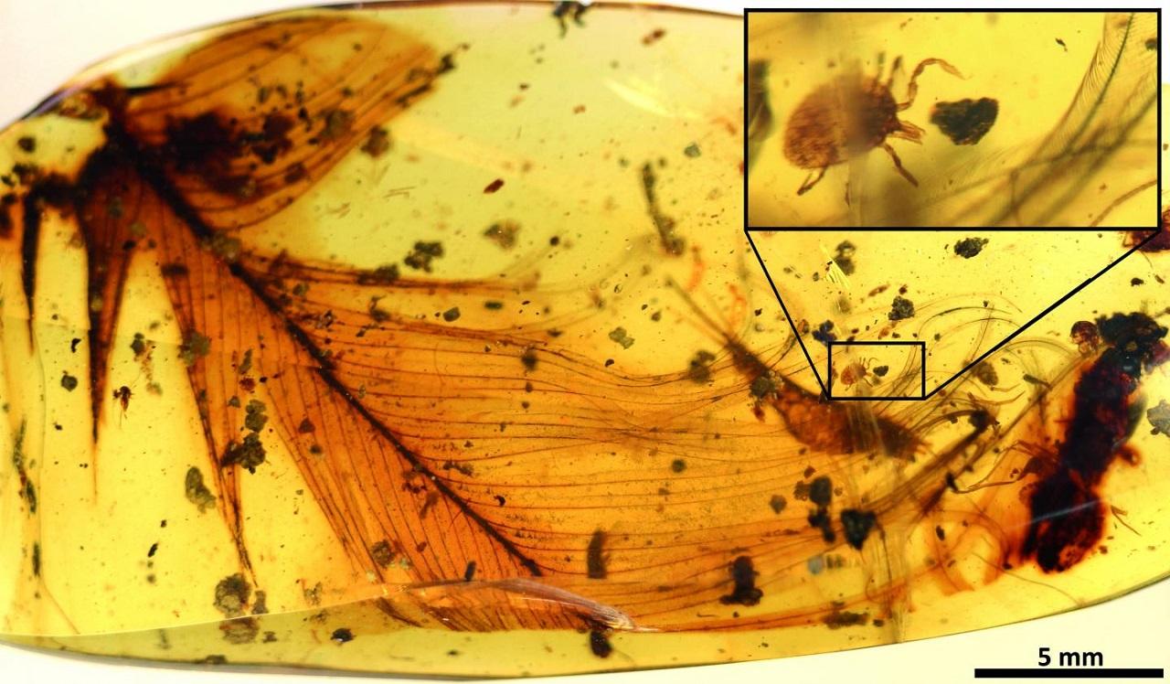 ტკიპები სისხლს დინოზავრებსაც წოვდნენ - აღმოჩენა 100 მლნ წლის წინანდელ ქარვის ნატეხში