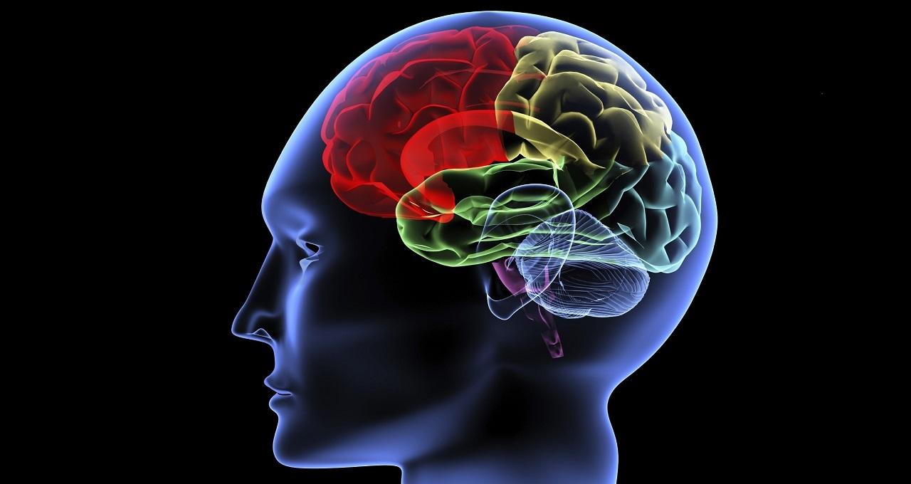 ტვინში აღმოჩენილია უბანი, რომელშიც შესაძლებელია ნიკოტინზე დამოკიდებულების დაბლოკვა