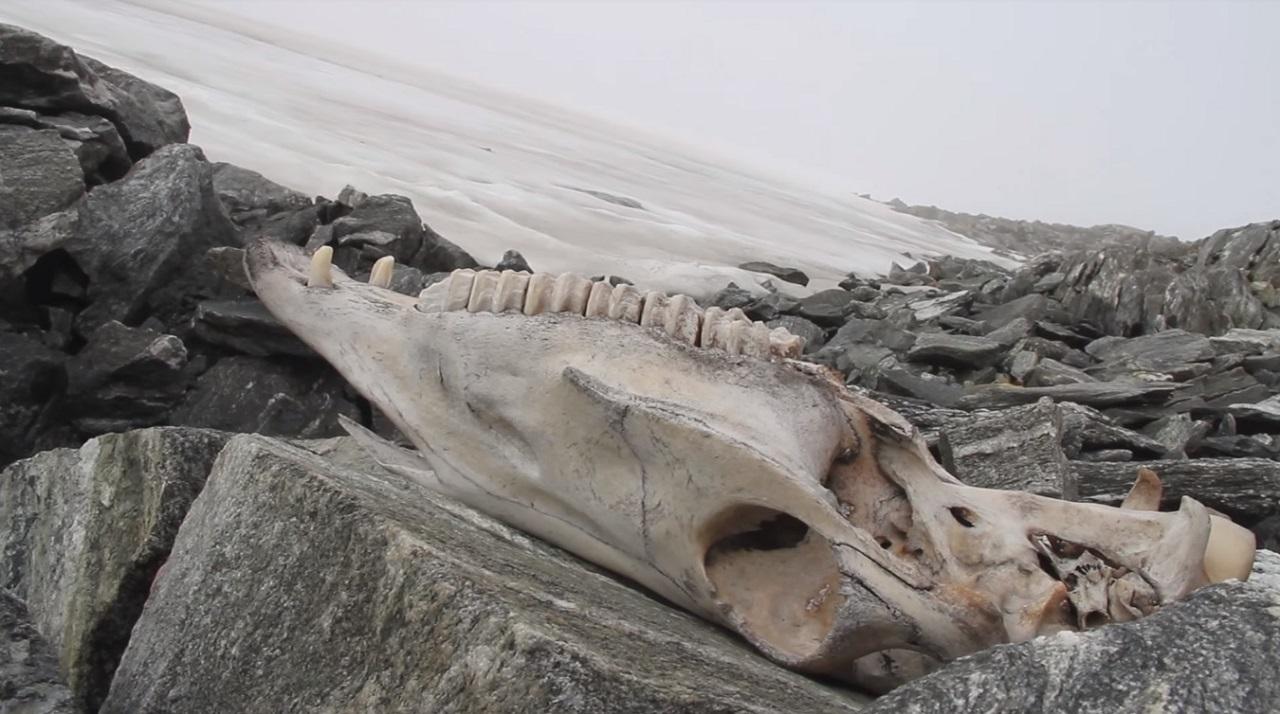 კლიმატის ცვლილების გამო, ნორვეგიის მყინვარებში, ათასობით ვიკინგებამდელი არტეფაქტი გამოჩნდა