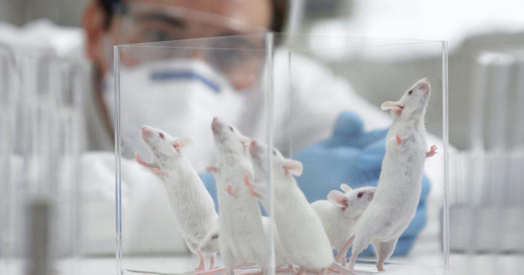 თაგვებში ალცჰაიმერის დაავადება მკვლევრებმა წარმატებით დაამარცხეს