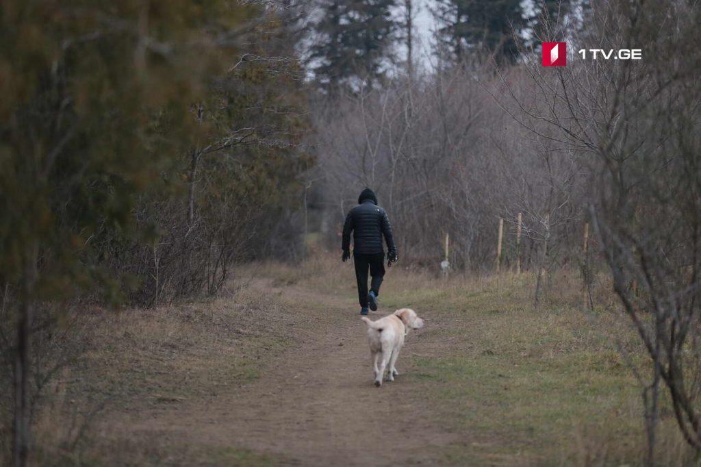 გუგეშაშვილების ოჯახზე თავდასხმასთან დაკავშირებით დიღმის ტყე-პარკში სამძებრო ღონისძიებები მიმდინარეობს