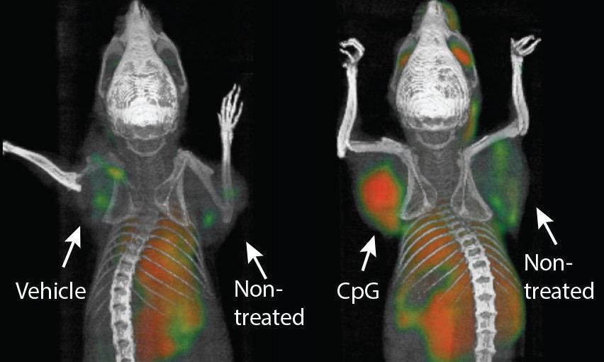 """კიბოს ახალმა """"ვაქცინამ"""" თაგვებში სიმსივნე სრულად მოსპო - ცდები მალე ადამიანებზეც ჩატარდება"""