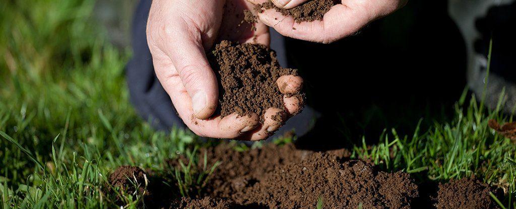 მიწაში აღმოჩენილია ახალი სუპერმძლავრი ანტიბიოტიკი