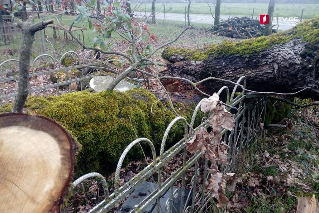 ლაგოდეხში წაქცეულმა ხემსაფლავები დააზიანა