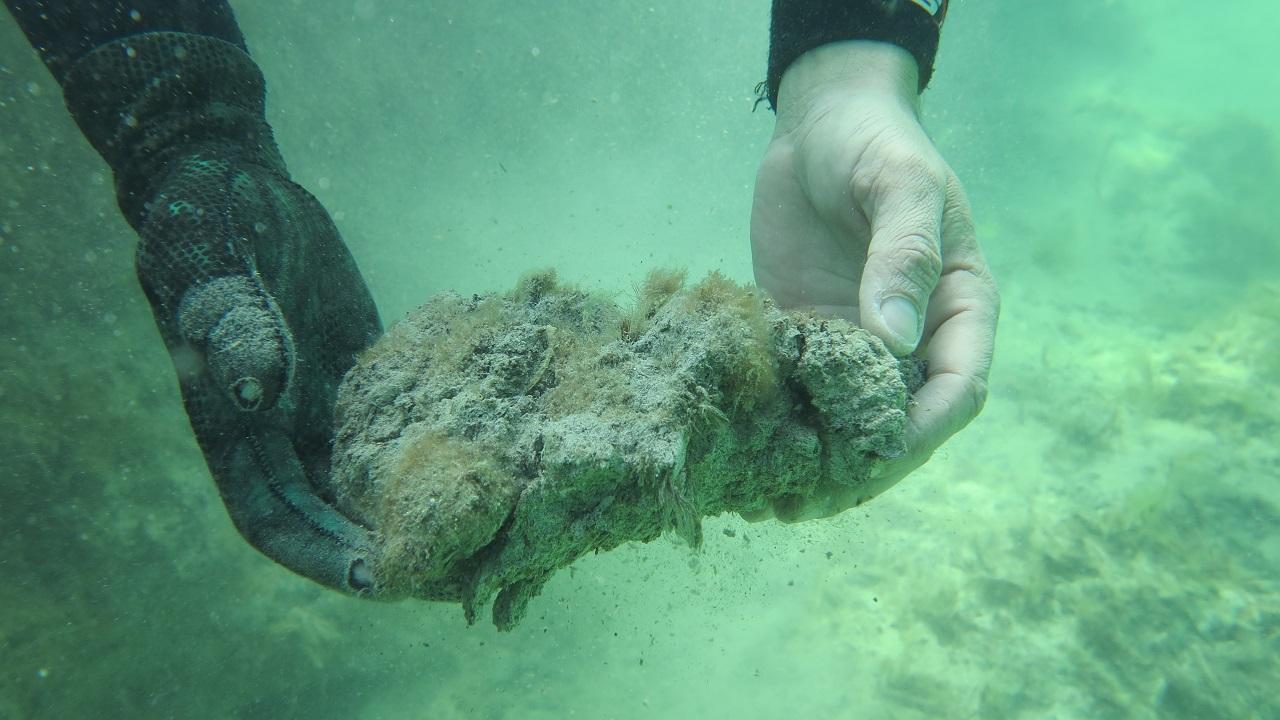 ოკეანიდან უზარმაზარი ოდენობის CO2 გამოიყო, რაც ვერავინ შენიშნა - განადგურებულია უნიკალური მცენარეულობა