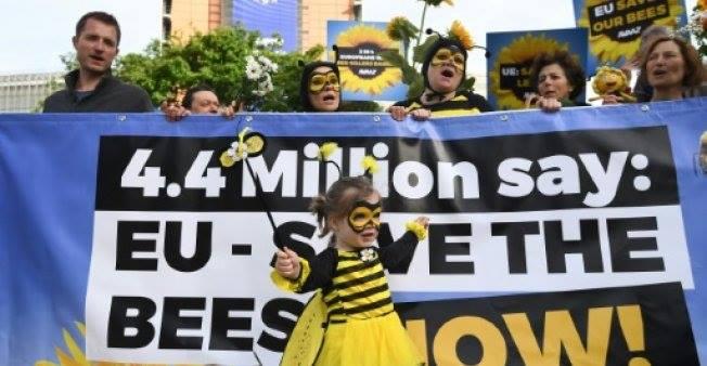 ევროკავშირმა ფუტკრების მკვლელი სამი პესტიციდის გამოყენება აკრძალა