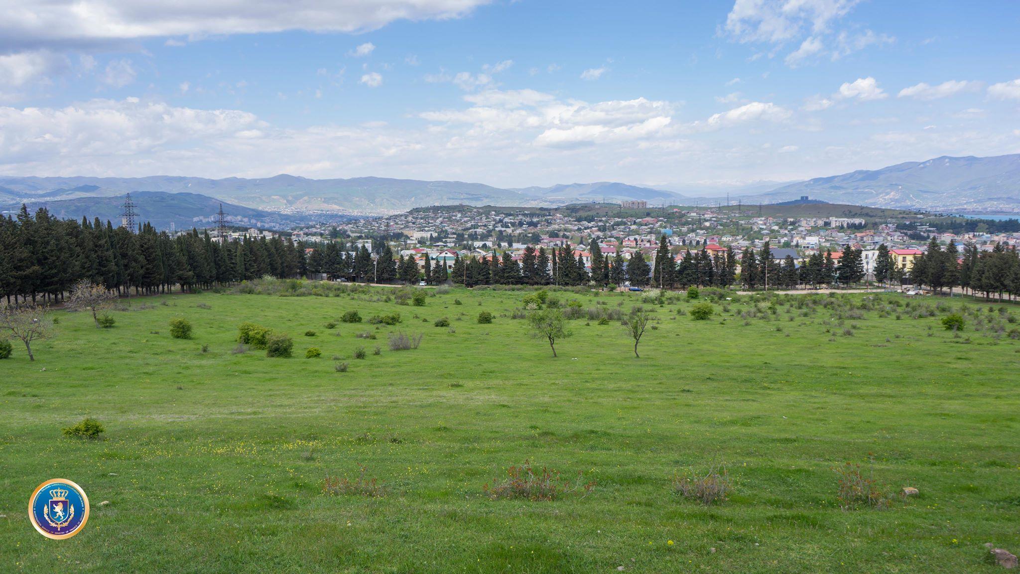 ყოფილი დენდროლოგიური პარკის ტერიტორიაზე არსებული მიწის ნაკვეთების თაღლითურად დაუფლების ფაქტზე 12 პირი პასუხისგებაში მიეცა