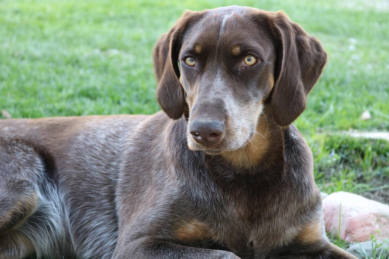 გრძნობენ თუ არა ძაღლები მიწისძვრას წინასწარ - რას ამბობს მეცნიერება