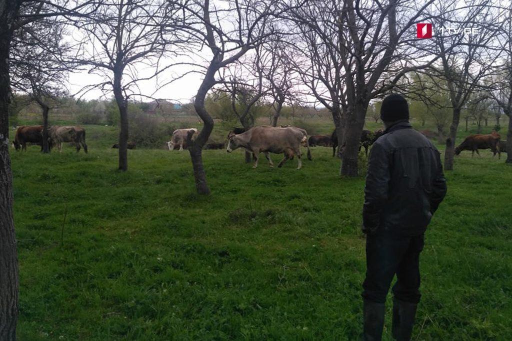 Российские оккупанты задержали пастуха около села Джариашени