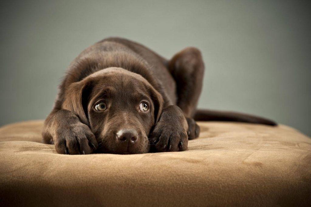 ადამიანებს ძაღლები მეტად უყვართ, ვიდრე ერთმანეთი - ახალი კვლევა