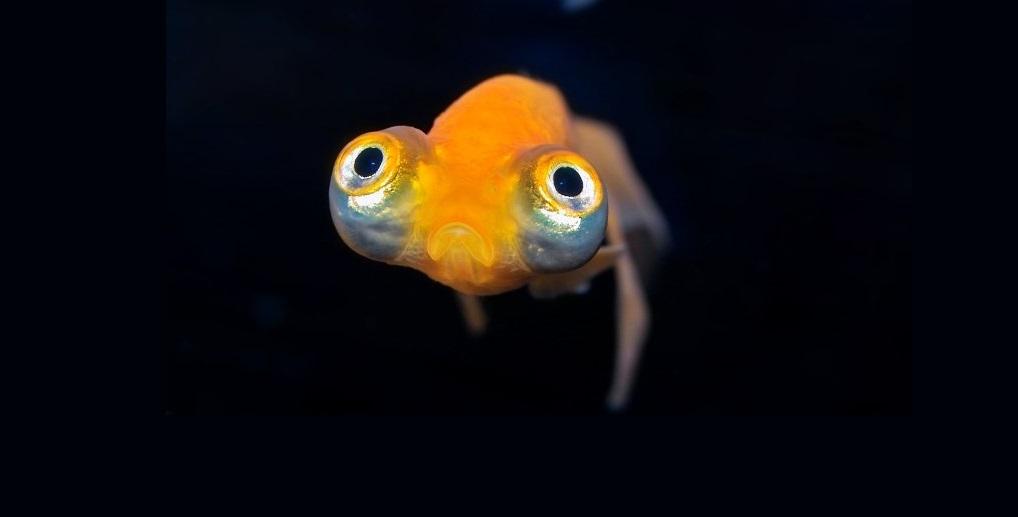 ბაყაყებში, თევზებსა და რეპტილიებში აღმოჩენილია ამ დრომდე უცნობი 214 ვირუსი