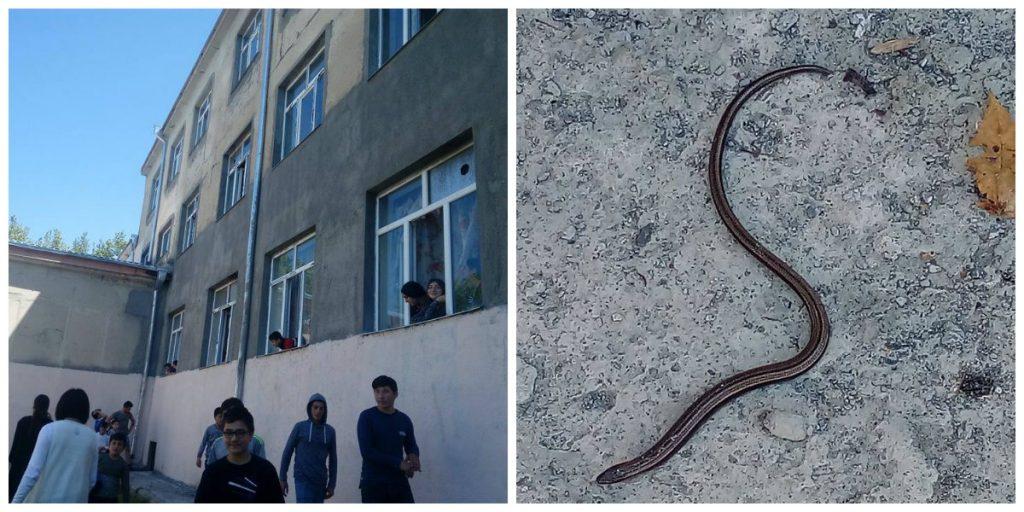 ლაგოდეხის მუნიციპალიტეტის სოფელგიორგეთის საჯარო სკოლაში ქვეწარმავლები გამოჩნდნენ