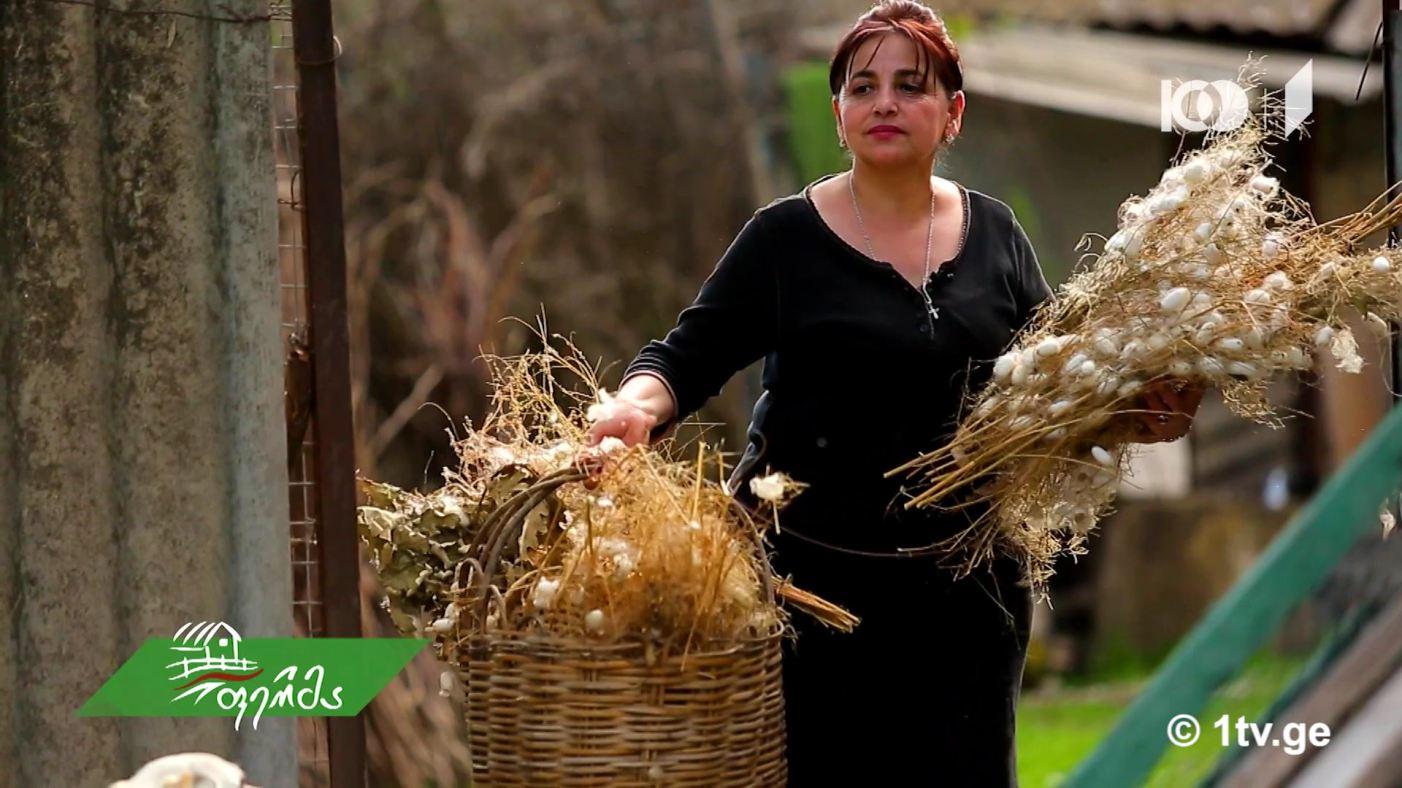 #ფერმა მეაბრეშუმე ლამარა ბეჟაშვილისა და  თუთის აბრეშუმხვევიას ქართული ამბავი