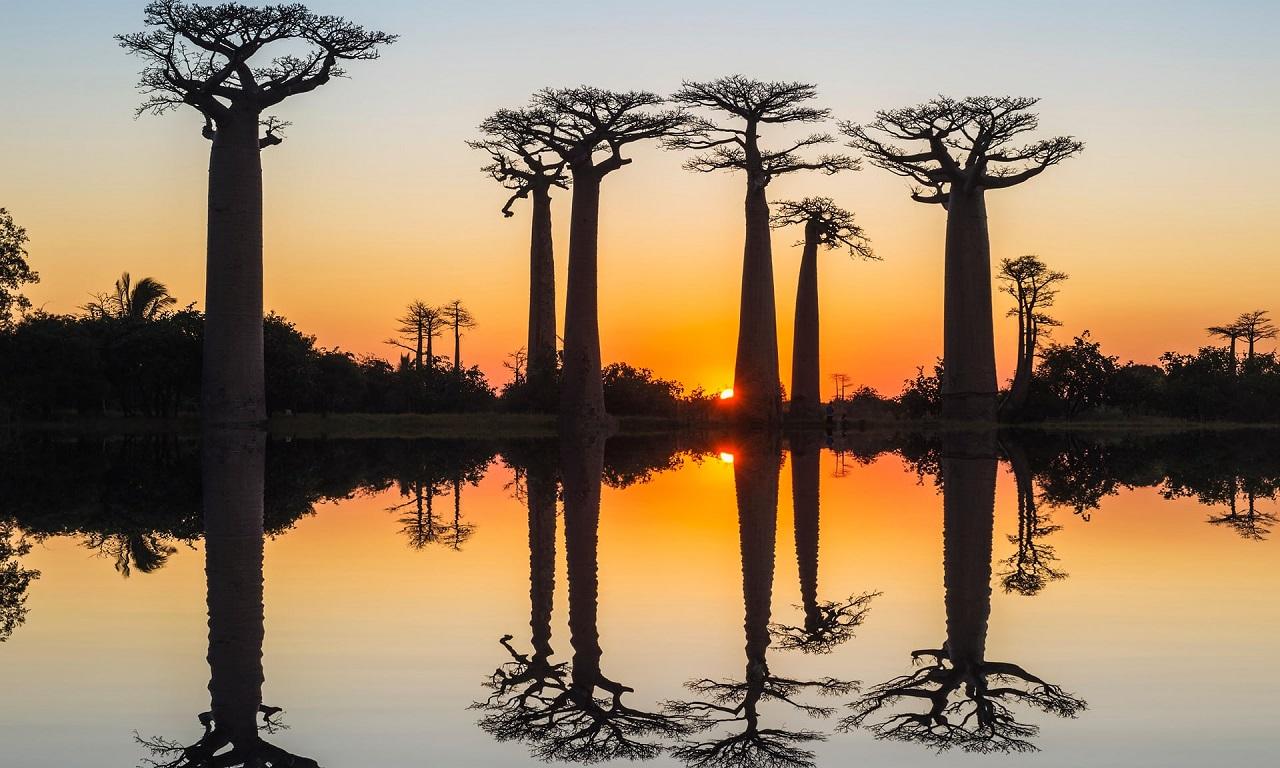 აფრიკაში ათასწლოვანი ბაობაბები მასობრივად ხმება - მეცნიერებმა მიზეზი არ იციან