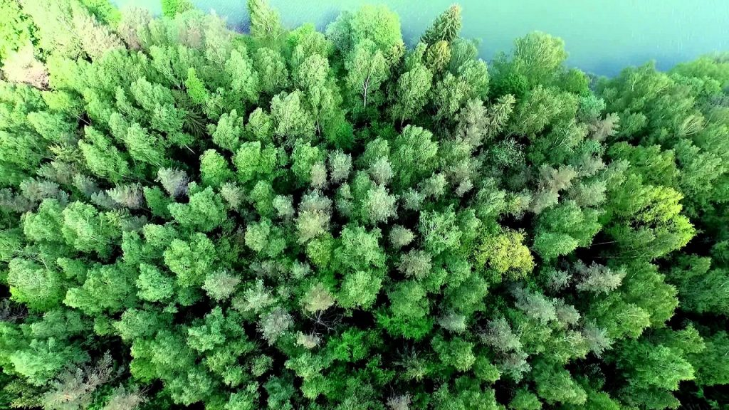 2017 წელს ჩვენი პლანეტა ყოველ წუთში 40 საფეხბურთო მოედნის ზომის ტყის საფარს კარგავდა