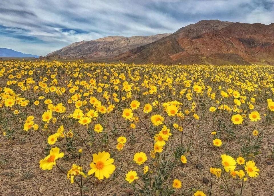 დედამიწის ყველაზე ცხელი ადგილი ყვავილებით დაიფარა