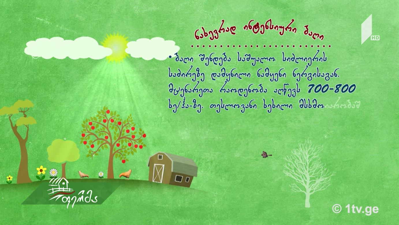 #უკეთრომაკეთო ბაღის ტიპები მეხილეობაში და მათი მახასიათებლები