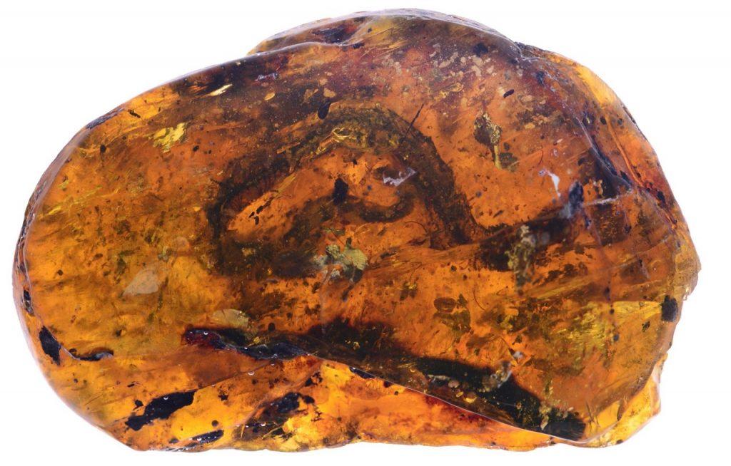 აღმოჩენილია ქარვაში ჩაჭედილი უძველესი, დინოზავრების ეპოქის გველი