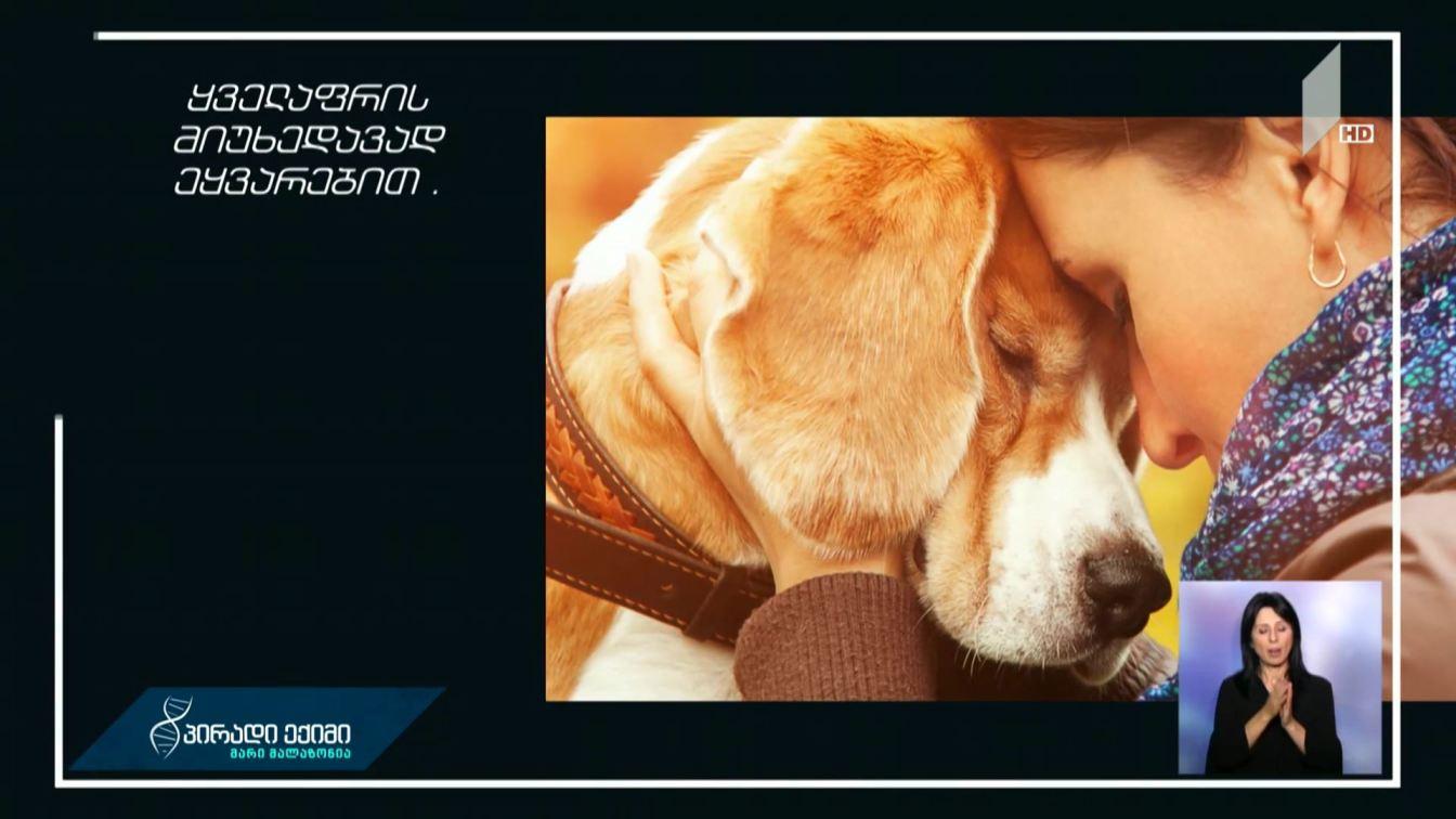 #პირადიექიმი შინაური ცხოველები ადამიანის მენტალურ ჯანმრთელობაზე დადებითად მოქმედებს