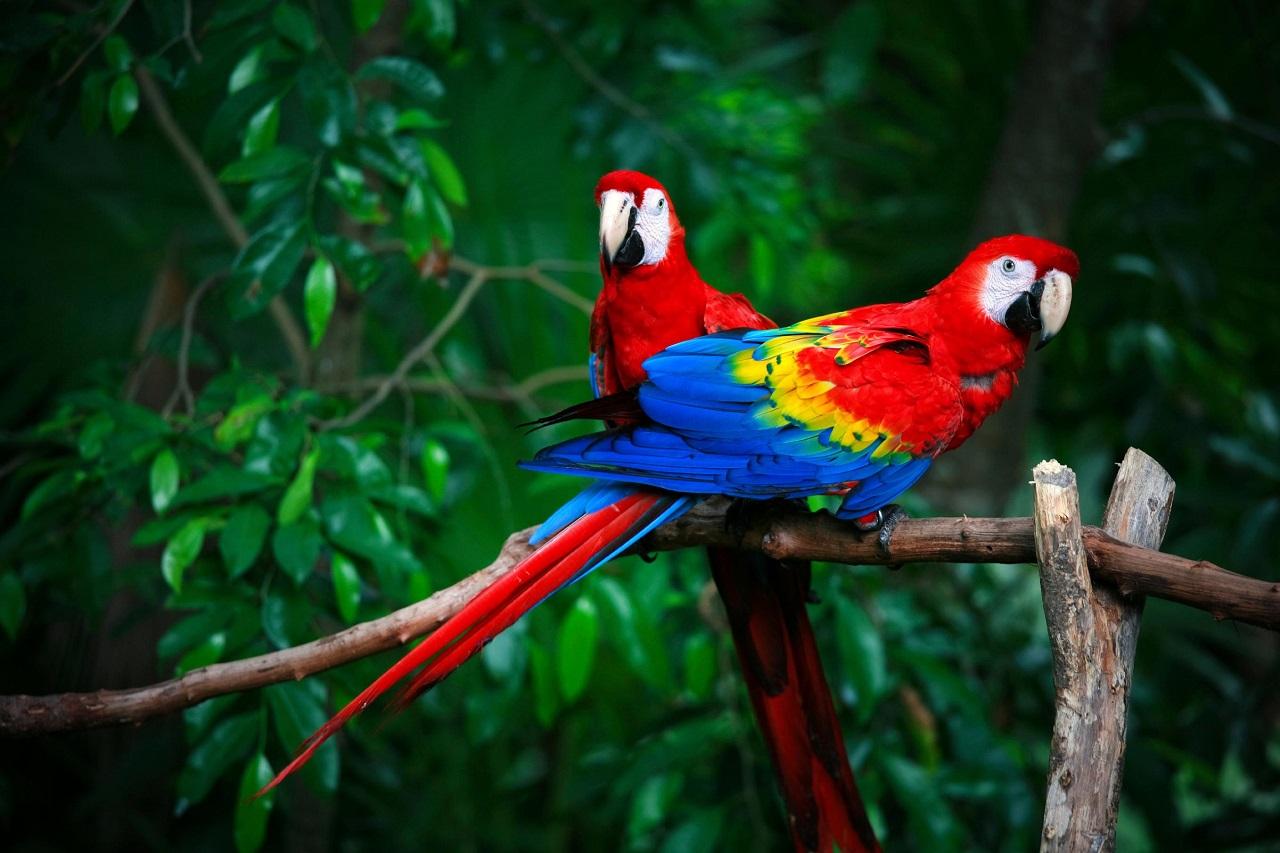 ნეირომეცნიერებმა თუთიყუშების გონებრივ შესაძლებლობათა საიდუმლო ამოხსნეს