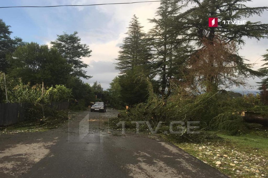 Стихия в Цаленджиха - Сильный ветер сорвал крыши с нескольких домов и вырвал с корнем многолетние деревья