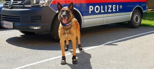 Венæ æмæ   Цюрихы   полициаг  куыйтæн  тæвдæй  бахизынæн  специалон къахыдарæс   байуæрстой
