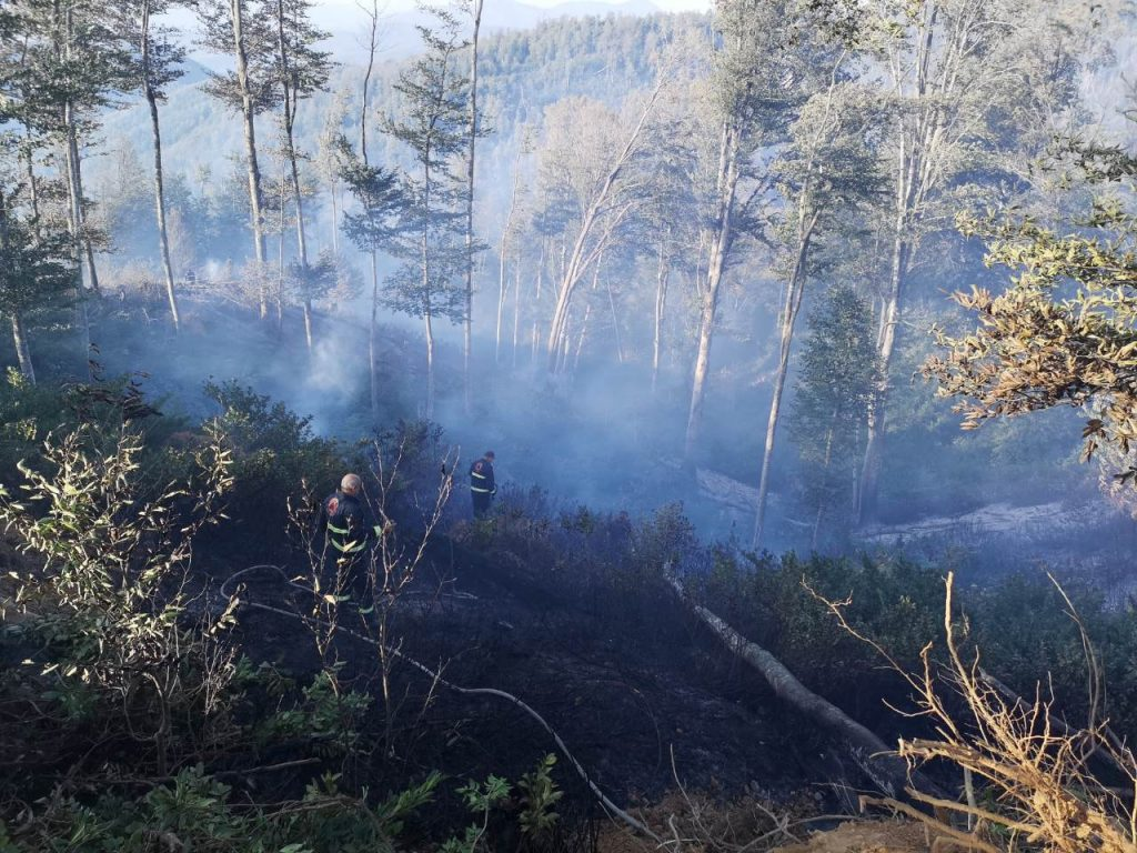 fire in Khashuri forest