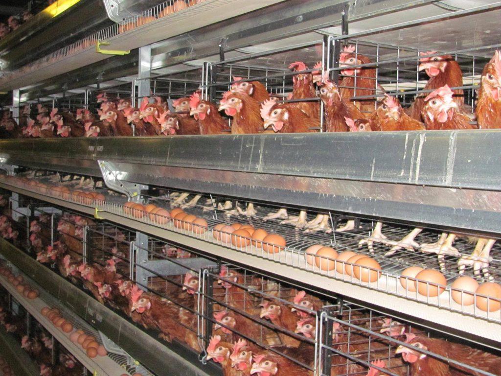 სომხეთმა რუსეთის ზოგიერთი რეგიონიდან ღორის ხორცისა და ფრინველის იმპორტი აკრძალა