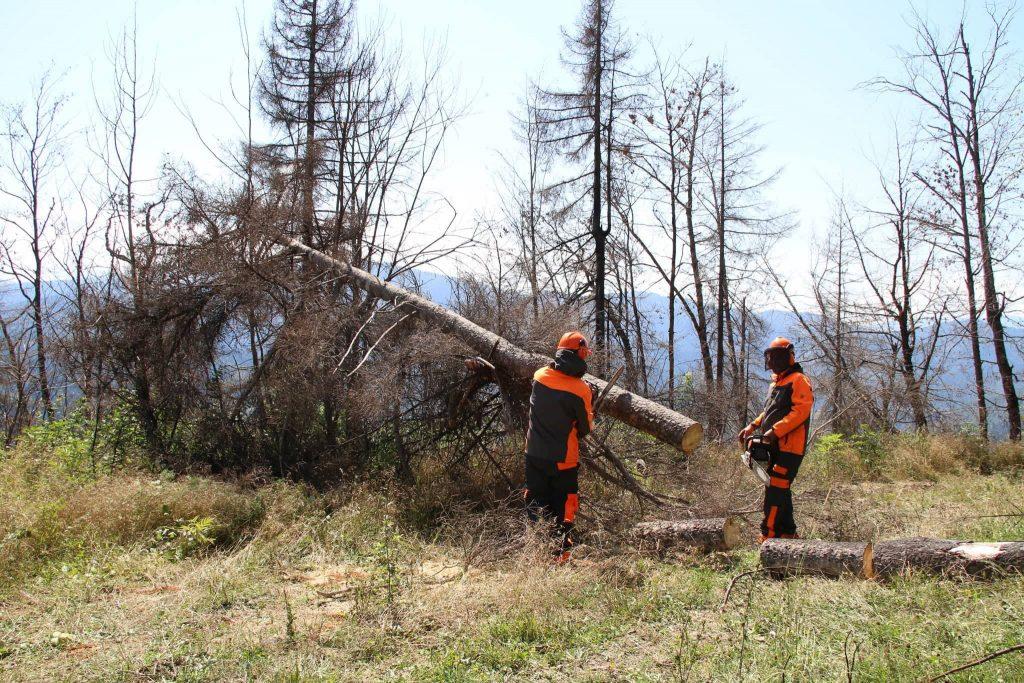 ბორჯომის ხეობაში ხანძრით დაზიანებული ტყის აღდგენის სამუშაოები სექტემბერში დაიწყება