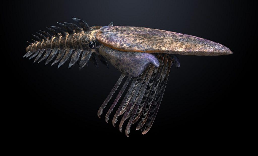 """როგორ """"აფეთქდა"""" სიცოცხლე ოკეანის ფსკერზე - ნახევარი მილიარდი წლის ნამარხის საიდუმლო"""