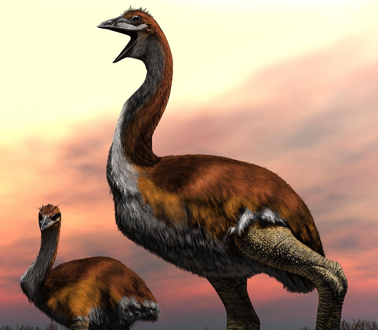 ზოოლოგებმა ყველა დროის უდიდესი ფრინველი დაასახელეს