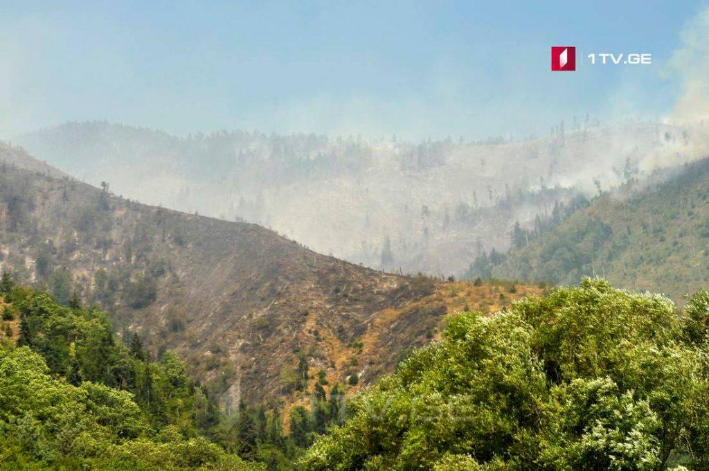 Завтра в Боржоми начинается восстановление лесного массива