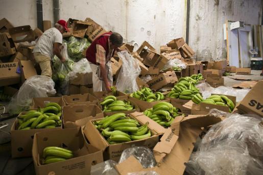 ესპანეთის პოლიციამ კოლუმბიიდან ტრანსპორტირებულბანანებში დამალული ექვს ტონამდე კოკაინი აღმოაჩინა