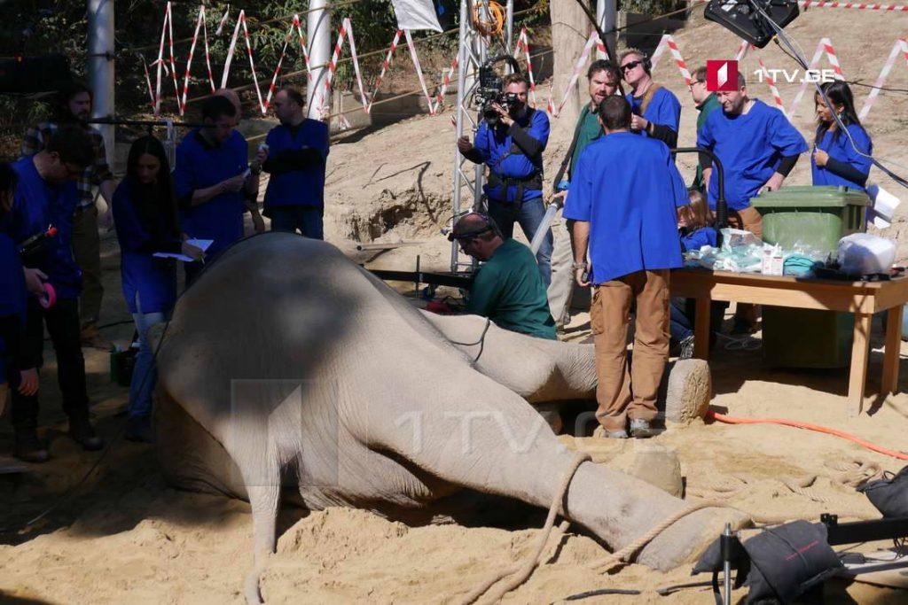"""თბილისის ზოოპარკში სპილო """"გრანდის"""" ოპერაცია დასრულდა [ფოტო]"""