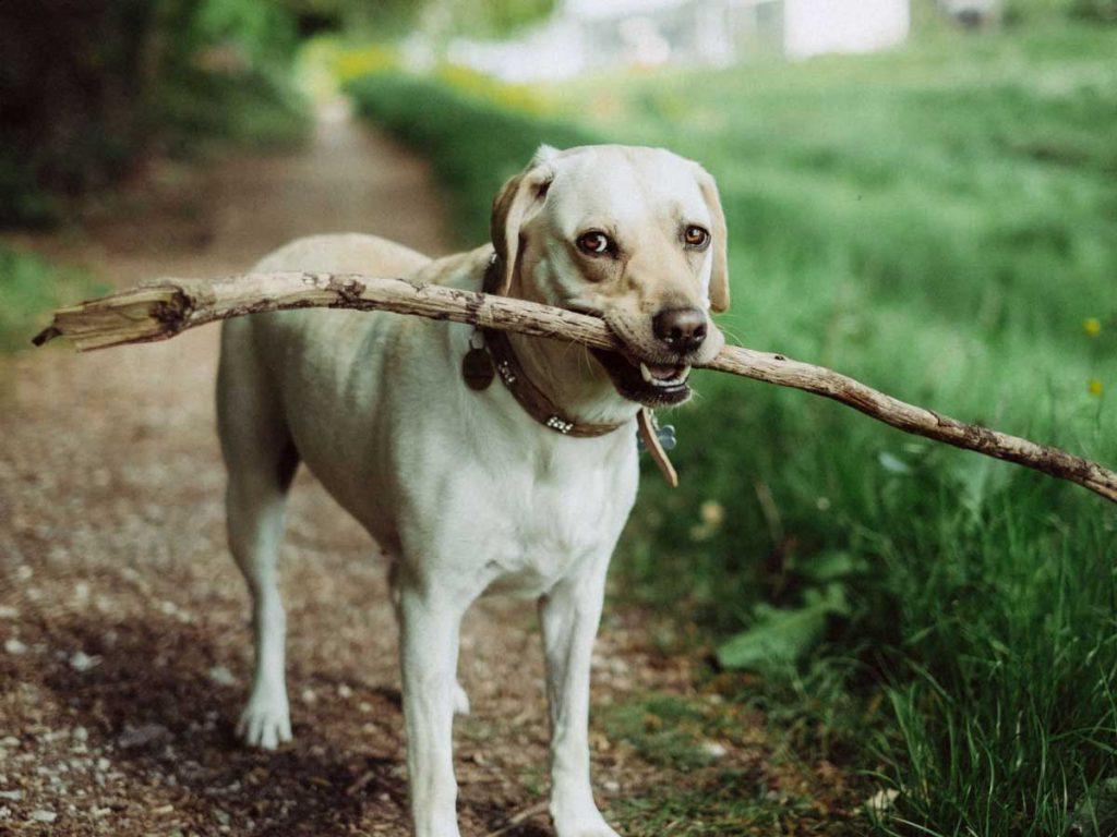 ძაღლები კატებზე ჭკვიანები არ არიან - ახალი კვლევა