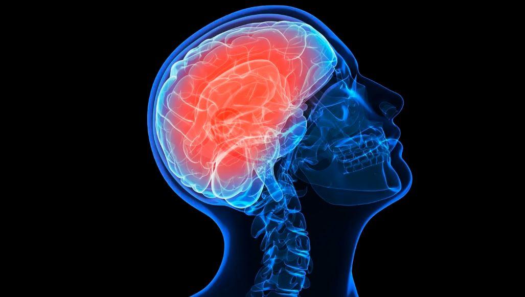 ადამიანის თავის ტვინში შესაძლოა, ბაქტერიები ბინადრობენ - ახალი კვლევა