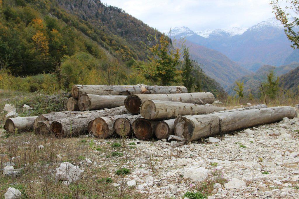 გარემოსდაცვითი ზედამხედველობის დეპარტამენტმა სამეგრელოს რეგიონში 37 858,83 ჰა ფართობზე გაცემული ხე-ტყის დამზადების ლიცენზია გააუქმა