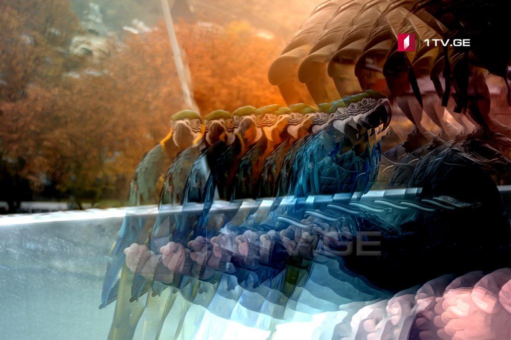 შემოდგომის ბოლო დღე თბილისში - ირაკლი გედენიძის ფოტოამბავი