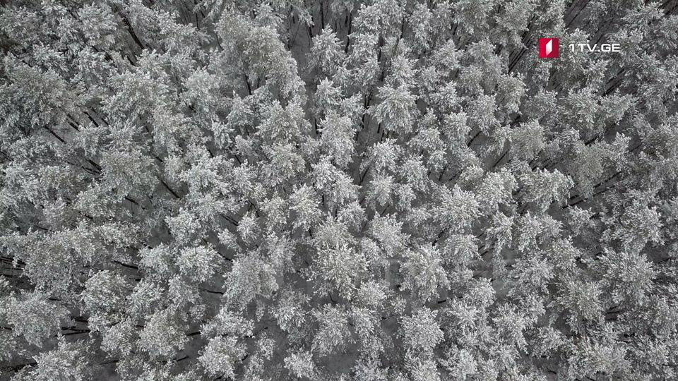 В Грузии 6-7 декабря температура воздуха ночью значительно снизится