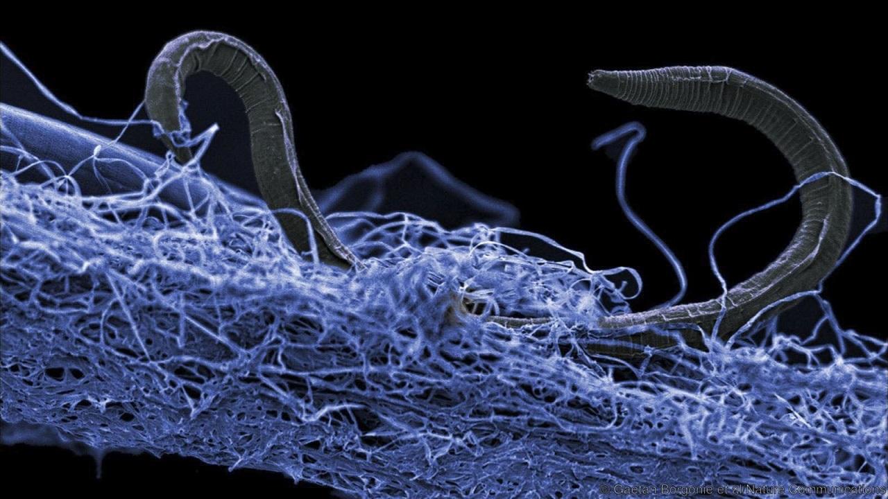 დედამიწის სიღრმეებში ვრცელი მიწისქვეშა ეკოსისტემა აღმოაჩინეს, რომელიც მილიარდობით მიკროორგანიზმს მოიცავს