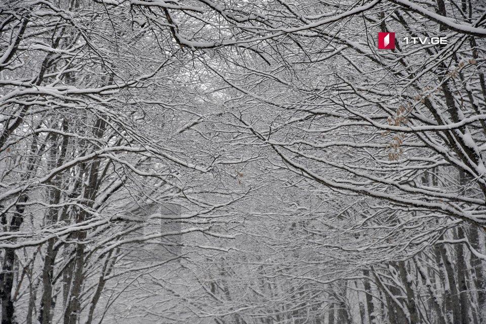 15 თებერვლამდე საქართველოში თოვლი და დაბალი ტემპერატურაა მოსალოდნელი