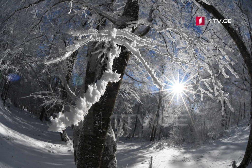 ზამთარი საბადურის ტყეში - ირაკლი გედენიძის ფოტოამბავი