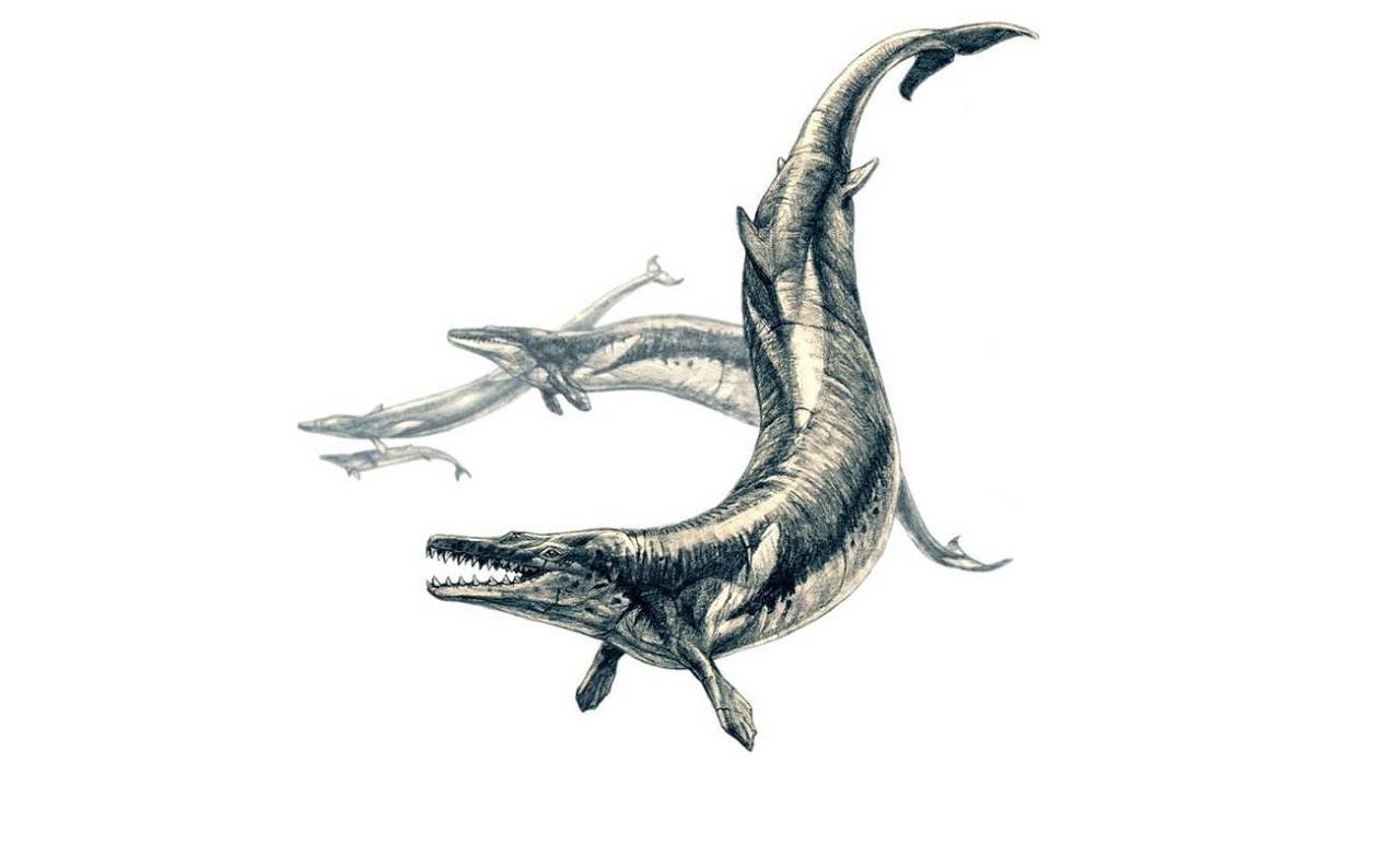 უძველესი გიგანტური ვეშაპის ნამარხის მუცელში სხვა ვეშაპები და ზვიგენები აღმოაჩინეს