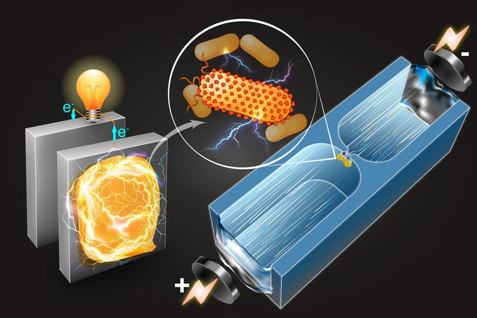 ბაქტერიები, რომლებიც ელექტროენერგიას გამოიმუშავებენ, უფრო ხელმისაწვდომი ხდება