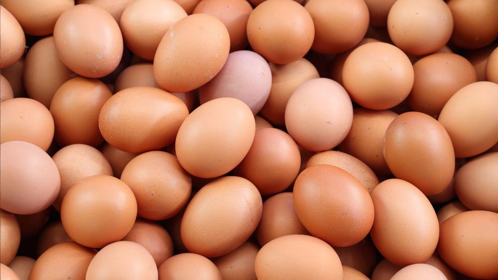 გენმოდიფიცირებულმა ქათმებმა კიბოს საწინააღმდეგო ცილის შემცველი კვერცხები დადეს