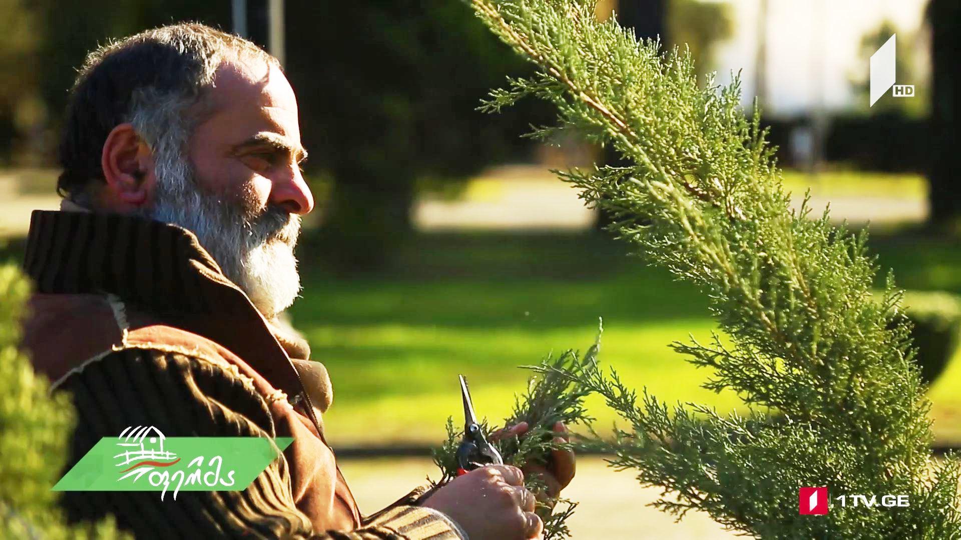 #არტიშოკი საფრანგეთიდან ჩამოტანილი და ზუგდიდში გახარებული დეკორატიული მცენარეები - გაიცანით გადაცემის უნიკალური გმირი, ბესო ჭითანავა