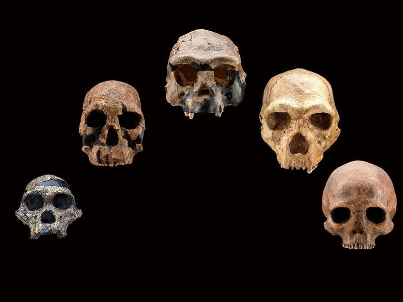 ხელოვნურმა ინტელექტმა ადამიანის გენომში ჩვენი უცნობი წინაპარი იპოვა